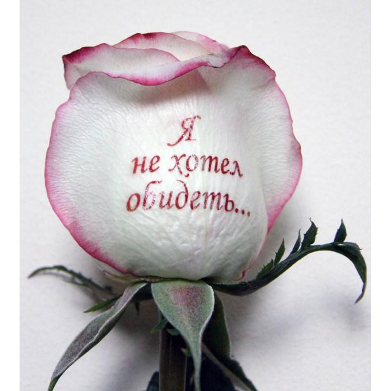 Розы красивые картинки с надписями